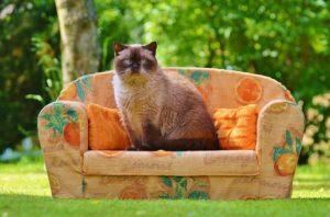 котка на диван